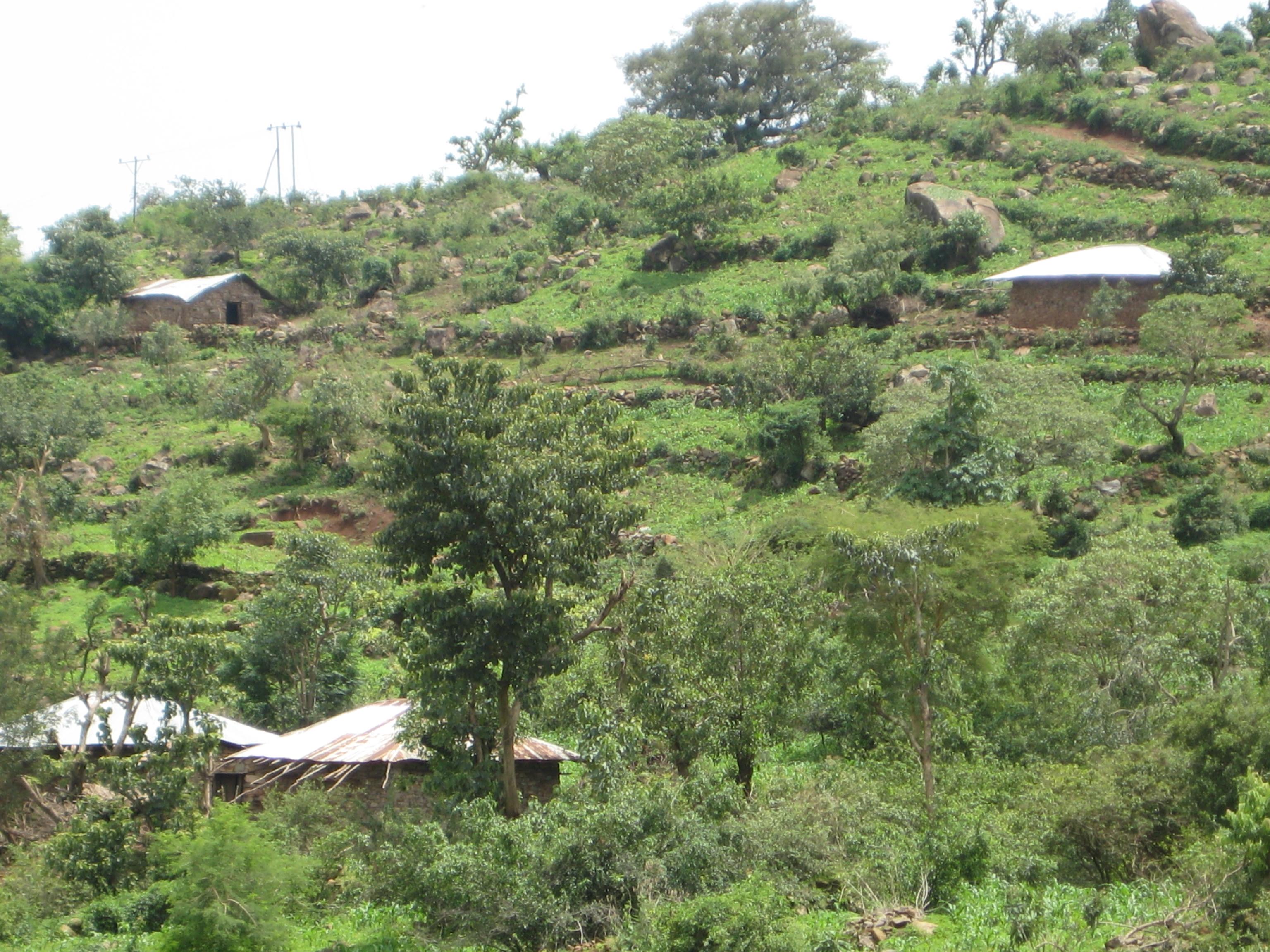 Entwicklungshilfe in idyllischer Umgebung: Landwirtschadtsprojekte im äthiopischen Gondar (C) Lopatka