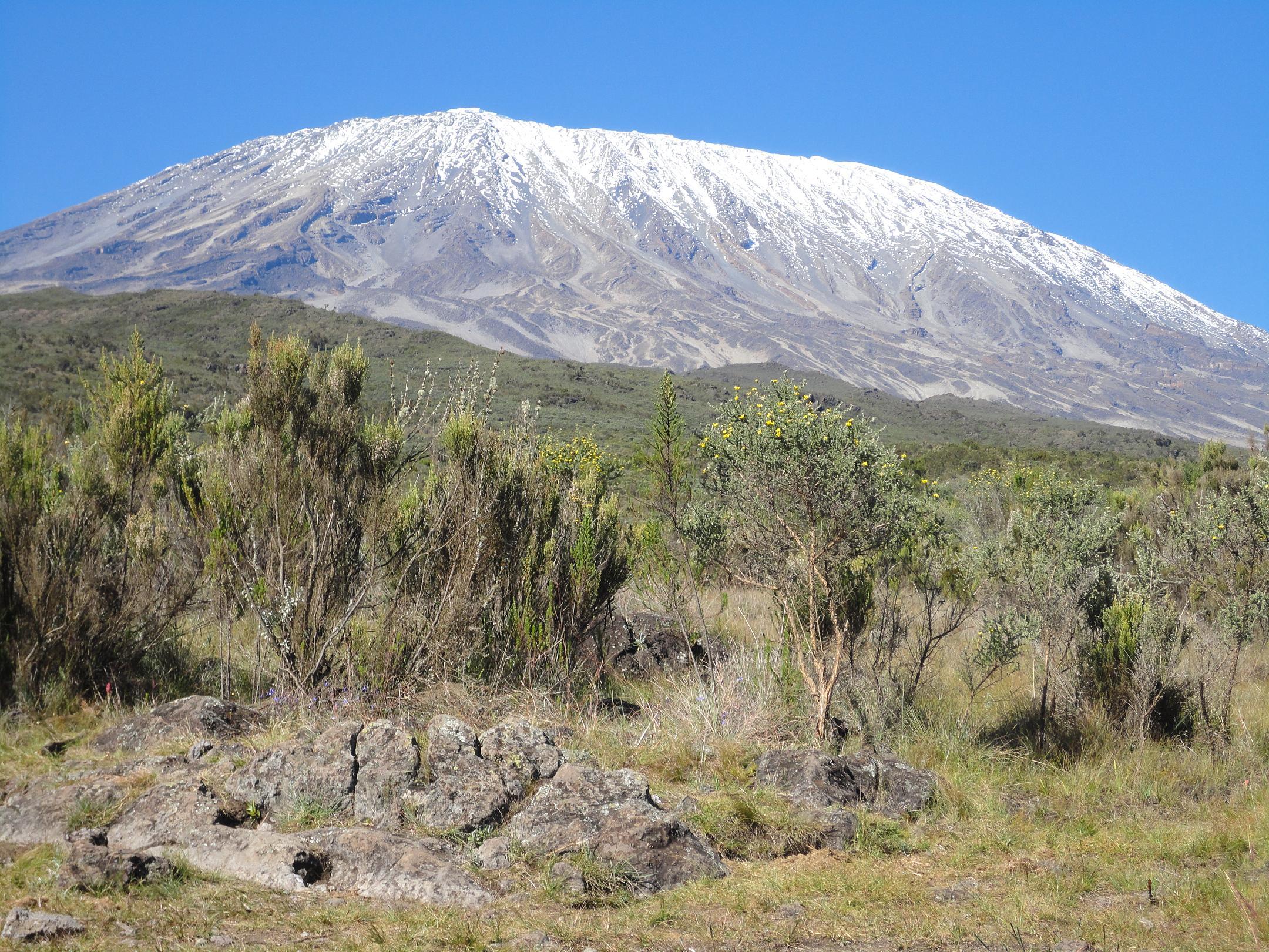 Das Ziel immer vor Augen - der Kilimanjaro (C) Privat