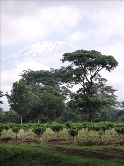 Kilimanjaro_2011_4