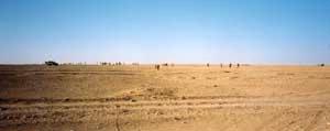 Sahara_7